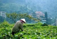 Tam Đảo nỗ lực giải quyết việc làm cho lao động nông thôn