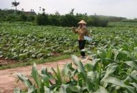 Tăng cường chỉ đạo sản xuất vụ Đông Xuân 2017-2018